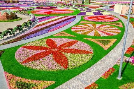 Miracle_Garden_dubai_bucket_list